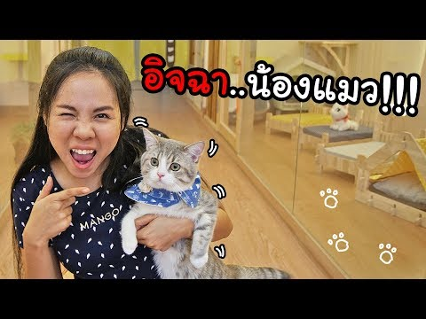 โรงแรมน้องแมว หรูที่สุดในประเทศ !!! | พี่เฟิร์น 108Life