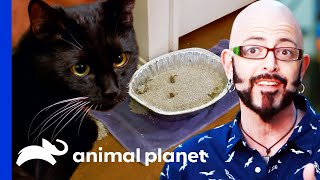 Kitten's Litter Box Needs A Serious Upgrade! | My Cat From Hell by Animal Planet