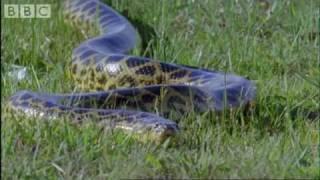 Anaconda - Birth