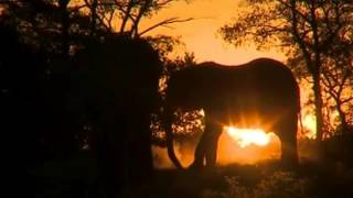 Beautiful sighting of elephants in silhouette at sunset on the PM Live Safari Drive at Djuma & Arathusa Game Reserves, South Africa. Edited down from a longe...