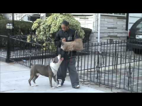 Brooklyn Blue Bullies: Hold,Escort & Release (видео)