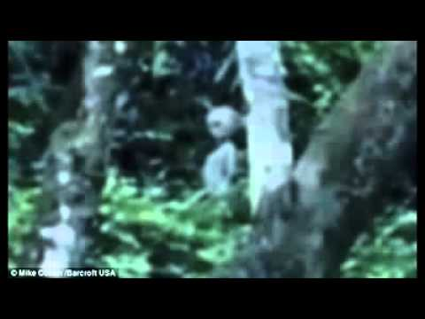 Alien Caught on Camera In Deep Amazon Forest – Full Video