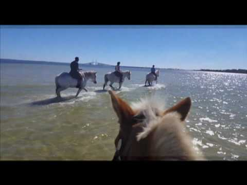 CYPRESS BREEZE Beach Horse back Rides Tampa Bay FLorida