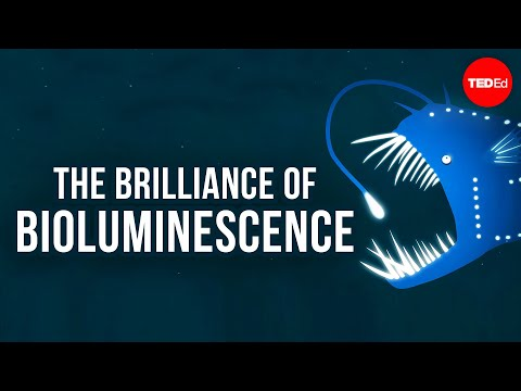 bio luminescence - View full lesson: http://ed.ted.com/lessons/the-brilliance-of-bioluminescence-leslie-kenna Some lucky animals are naturally endowed with bioluminescence, or ...