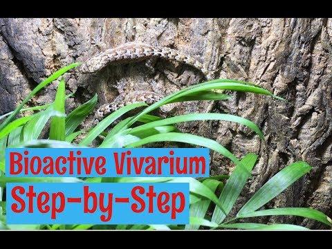 Vivarium (Bioactive) Build for Mourning Geckos_Terrárium, Vivárium. Heti legjobbak
