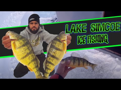 lake - Ice Fishing JUMBO Perch Fishing Lake Simcoe, Ontario Canada. Best fishing weekend for perch I've ever had, the perch on Lake Simcoe are like footballs in bot...