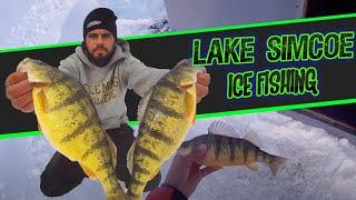 Simcoe (ON) Canada  city images : Ice Fishing Lake Simcoe - JUMBO PERCH