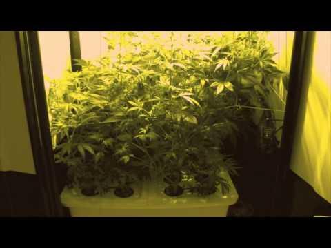 SuperCloset Deluxe Grow Box Stealth Grow Hydroponics Weed 420 Medicinal Marijuana