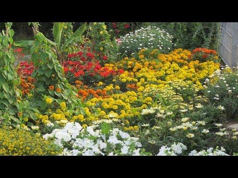 Sommerblumen: Bepflanzung und Entwicklung eines Bee ...