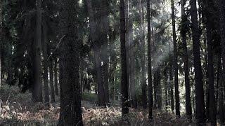 HERMÓÐR - The Mystic Forest (Official Video)