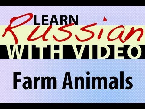 Russisch lernen mit Video - Farm Animals