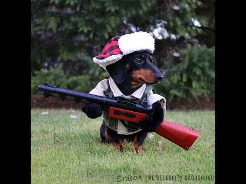 This Fearsome Dachshund Is Ready To Go Hunting for Wabbits
