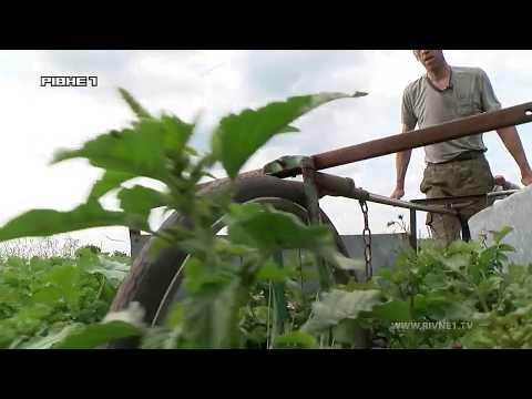 Як працює прилад боротьби з колорадськими жуками? Майстер-клас від жителя Рівненщини [ВІДЕО]