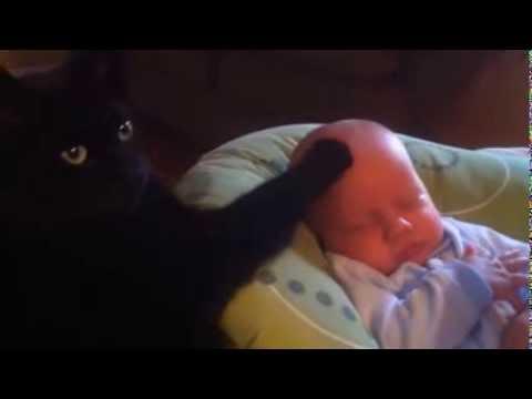 gatto fa addormentare un bambino che piange