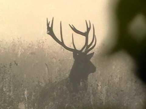 Polowanie na Największe Dziki na Węgrzech.