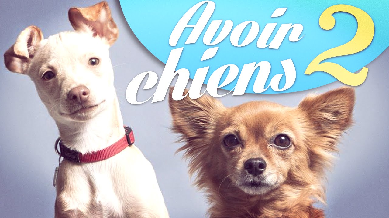 Avoir 2 chiens – Natoo