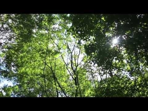E.L. Heath - Tŷ [album sampler - HD]