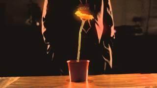 Laco Lučenič - Záhrada Voni