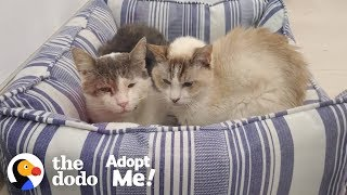 Bonded Shelter Cats Are Looking For A Home Together  | The Dodo Adopt Me! by The Dodo