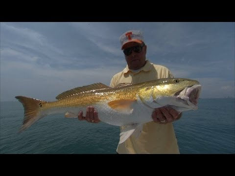 Dancing With The Stars - BILL DANCE's biggest redfish