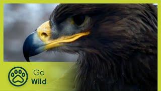 Video Puszta - Land of Salt and Sand - The Secrets of Nature MP3, 3GP, MP4, WEBM, AVI, FLV Agustus 2019