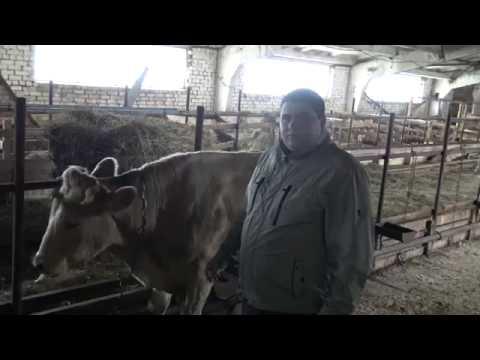 Фермер из Старицкого района грозится зарезать коров