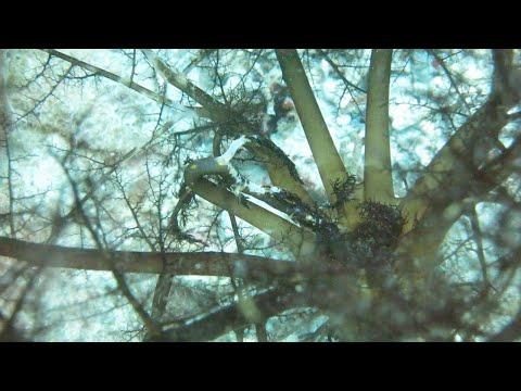 Прожорливый морской огурец поедает планктон
