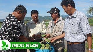 Nông nghiệp | Cần tháo gỡ khó khăn về vốn vay cho hợp tác xã