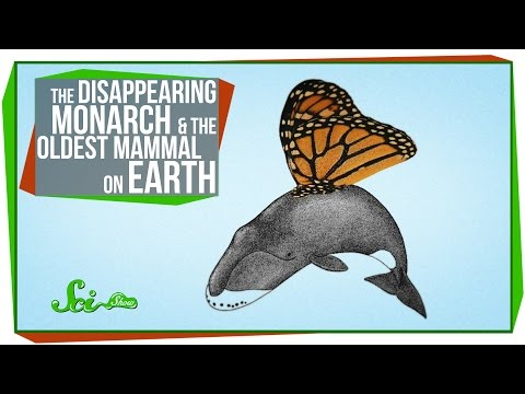 The Disappearing Monarch and the Oldest Mammal on Earth