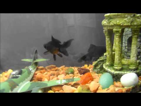 Fish care and tips