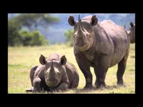 Animales en peligro de extincion zool gico congela c lulas para ayudar a preservar especies - Videos animales salvajes apareandose ...