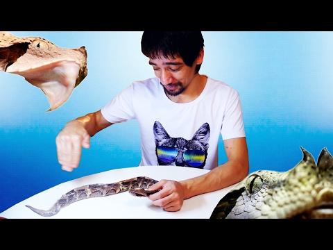 ЧТО ВНУТРИ ГОЛОВЫ ГАДЮКИ (18+) Анатомия змей на примере африканской гадюки. Часть 1 - DomaVideo.Ru