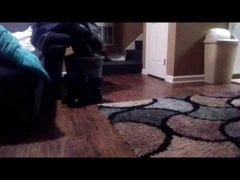 Ferret hides stuffed animal toys