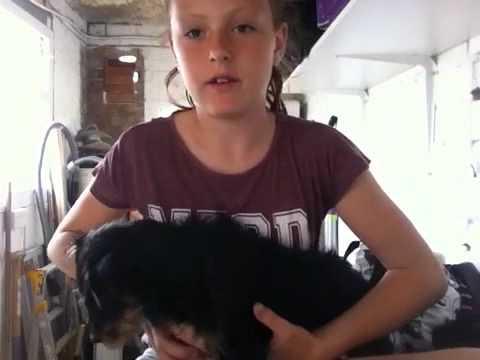 Video My dog honey star xxxx download in MP3, 3GP, MP4, WEBM, AVI, FLV January 2017