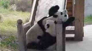 Funny Pandas on a slide