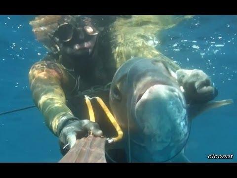 Chasse sous-marine – canal de la semaine 53 – CICONAT – Pescasub – Le top 10 des captures de 2013