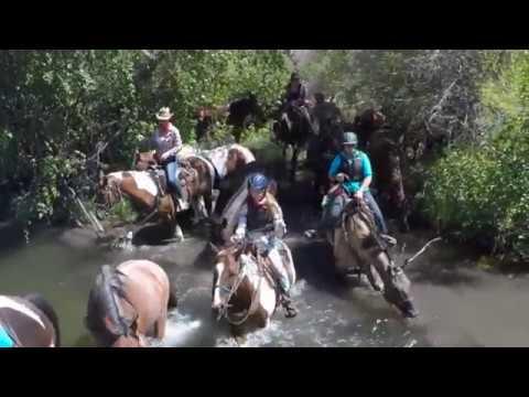 Convoyage de chevaux dans l'Idaho