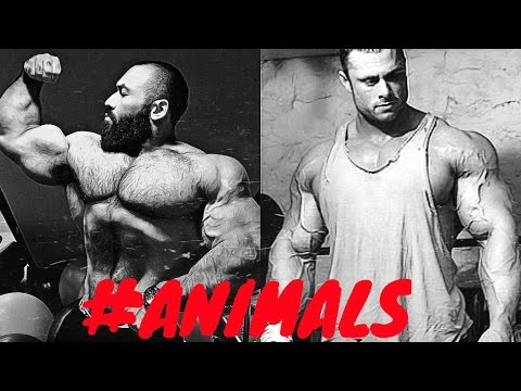 Download BODYBUILDING MOTIVATION - ANIMAL PLANET 2015 NEW HD Mp4 3GP Video and MP3