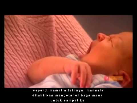 menyusui - Kunci keberhasilan pemberian ASI (menyusui) terletak pada metode pelekatan yang efektif. Pelekatan adalah proses masuknya puting payudara ibu ke dalam mulut ...
