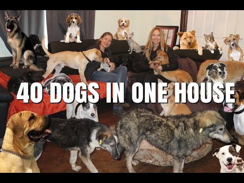 40 DOGS IN ONE HOUSE / Animal Watch