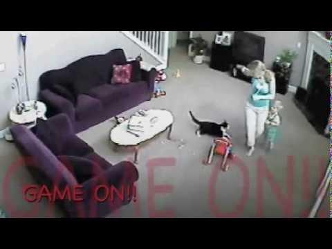 il gatto sente il pericolo e attacca la baby sitter