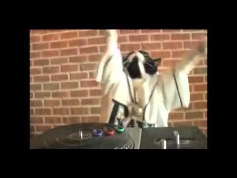 DJ Kitty