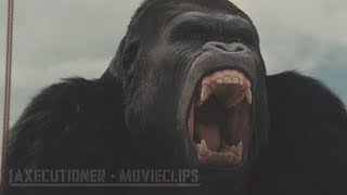 Nonton Rise Of The Planet Of The Apes  2011  All Fight Battle Scenes  Edited  Film Subtitle Indonesia Streaming Movie Download
