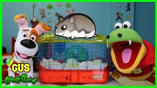 Kids Learn How to Take Care of pets dog and Hamster with Gus! Funny Video for Children