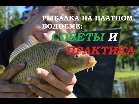 платная рыбалка в денди