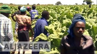 Twenty years ago, Zimbabwe's government seized white-owned commercial farms and gave them to black war veterans. Those white farmers say they are still waiti...