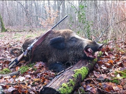 keiler - Chasse dans la Marne avec le tir d'un joli solitaire!!
