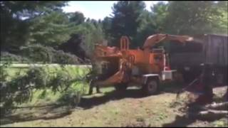 (Watch) This Hungry Wood Chipper In Action
