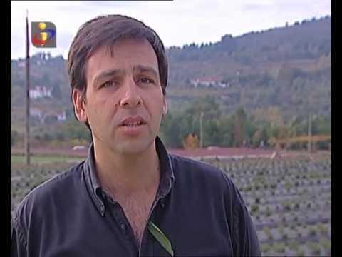 Casa de Penalva na TVI ( jornalista Vitor Pinto)