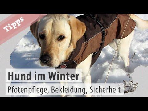 Winter mit Hund – Pfotenpflege, Hundebekleidung und Sic ...